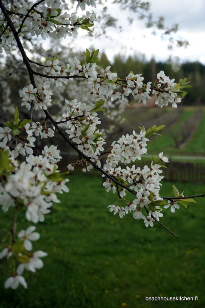 Alitalon omenaviinitila