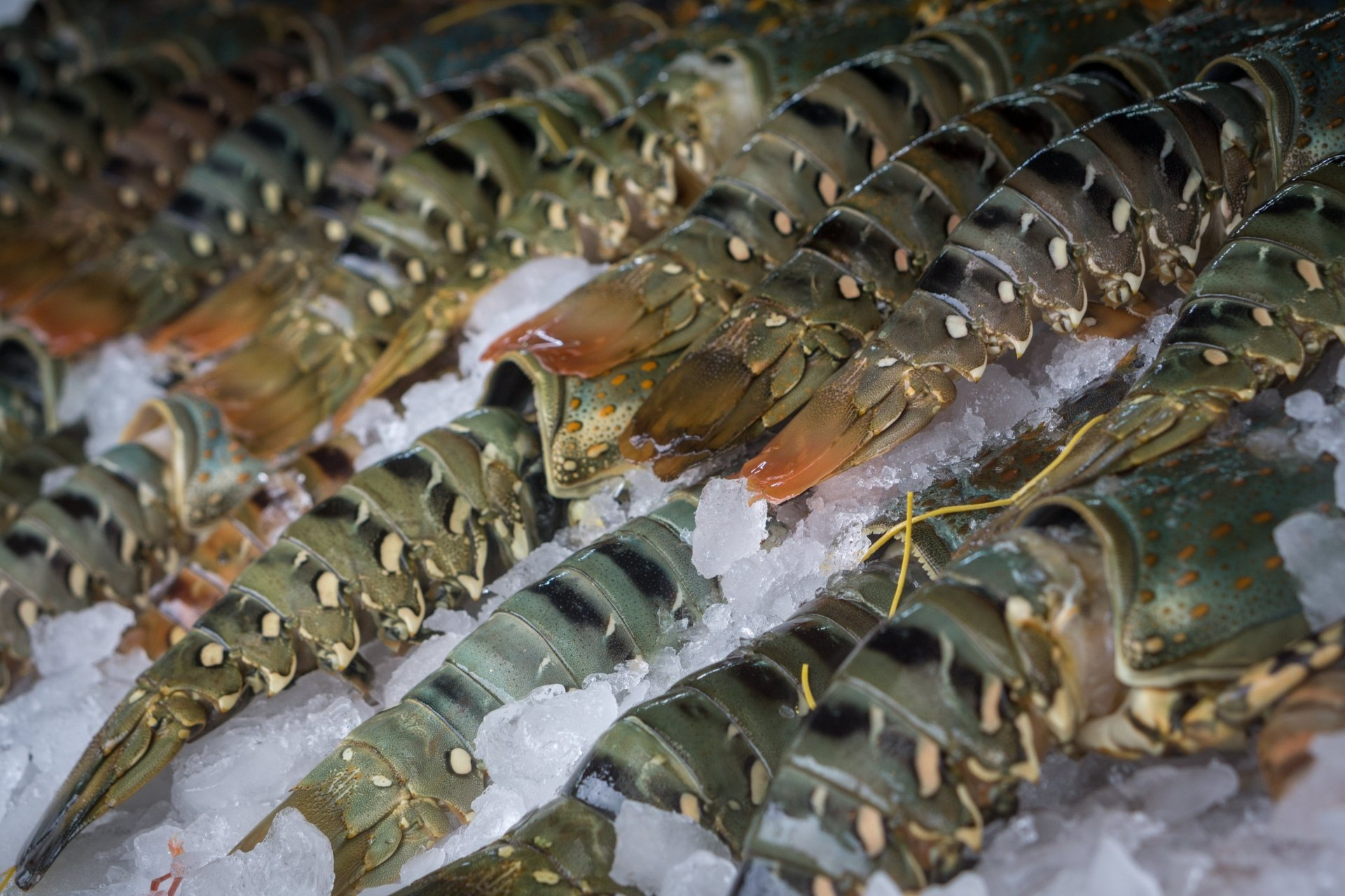 Phuketin ravintolat