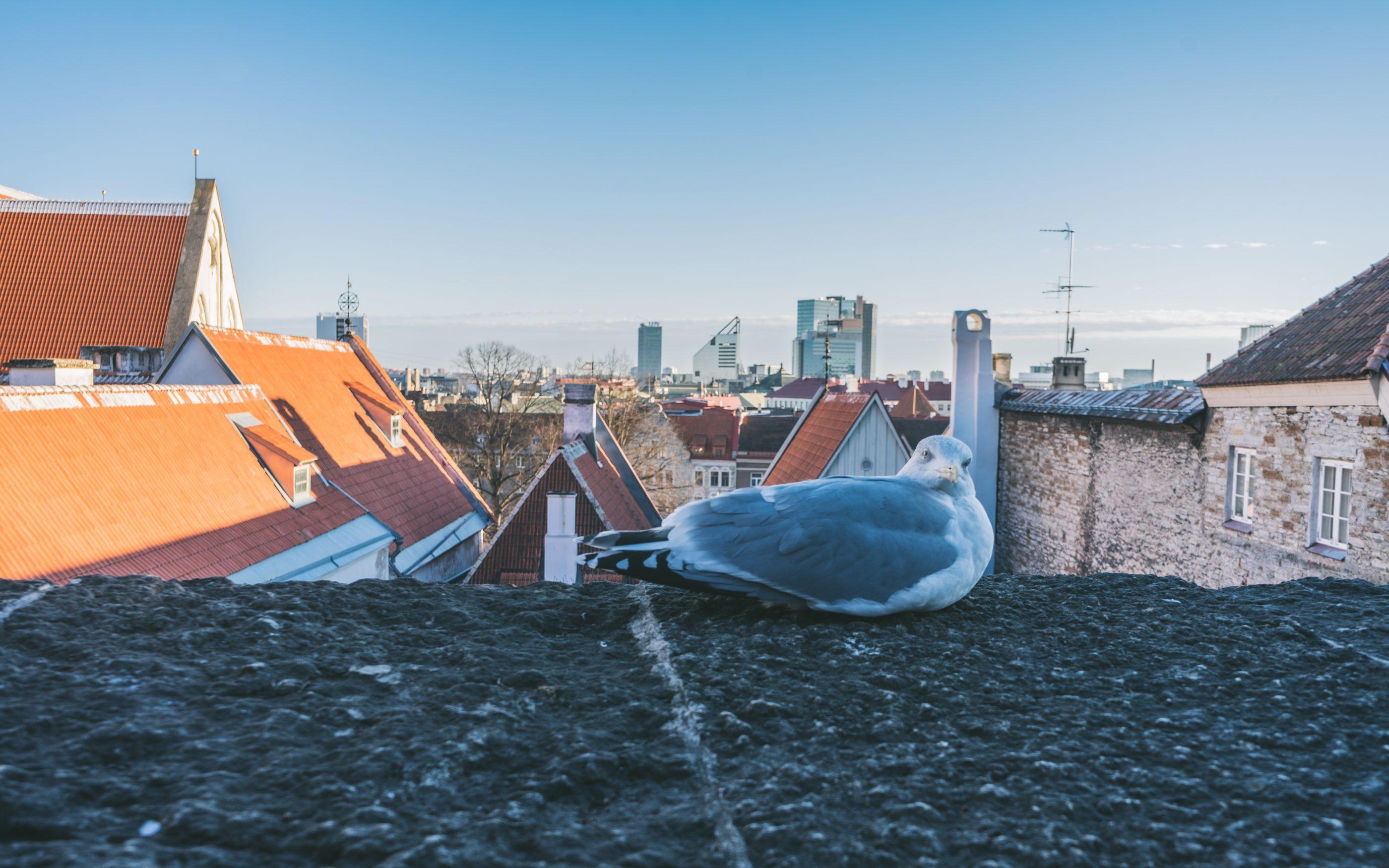 Tallinna Itämerenjoulu